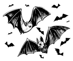 Sketch of a bat