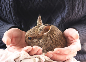 Little bunny in female hands