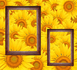 Frames surrounded by sunflower2