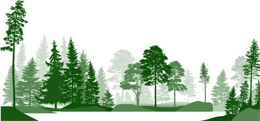 high green pines in fir trees forest on white