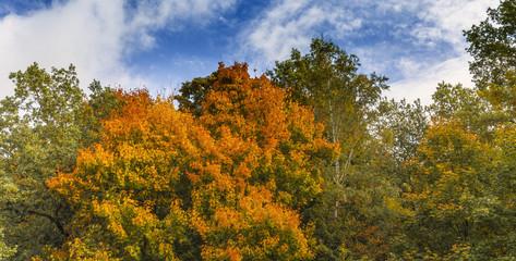 Herbstliches Panorama Laubwald