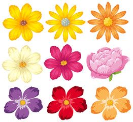 Different kinds of colorful flowers