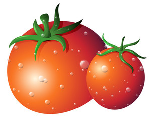Two fresh tomatoes on isolated white background
