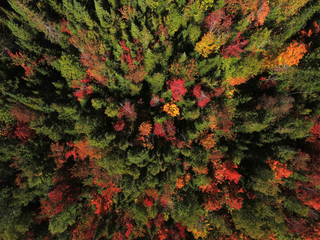 Foto op Aluminium Luchtfoto Aerial view of forest during fall
