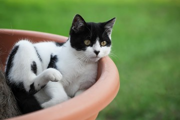 Cat sitting in a plant pot