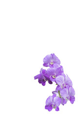 beautiful bouquet orchid flower isolated