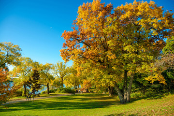 Colorful Autumn in Park, Toronto, Ontario, Canada