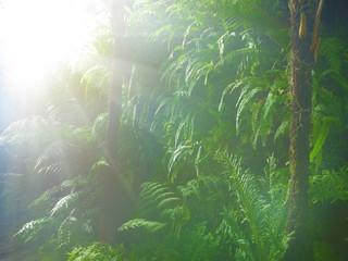 urwald mit nebel und farn im gegenlicht
