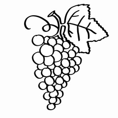 grape coloring  and white background