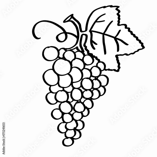Grape Coloring And White Background Stock Photo And Royalty Free