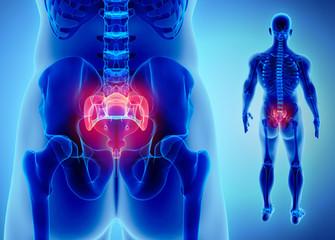 3D illustration of Sacral Spine, medical concept.