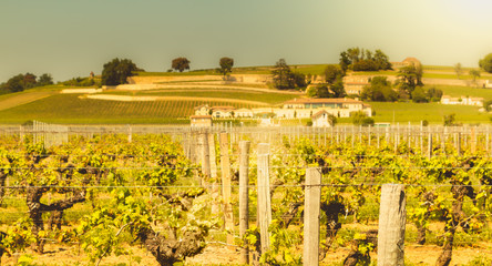 vineyard of Saint-Emilion, France, near Bordeaux at the end of spring 2017