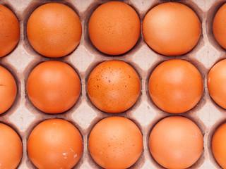 brown chicken eggs in carton