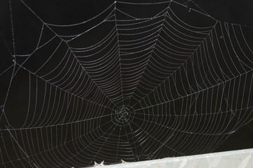 black and white spider web over a lake