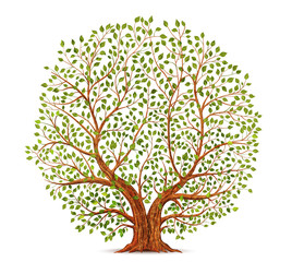 Old tree vector illustration