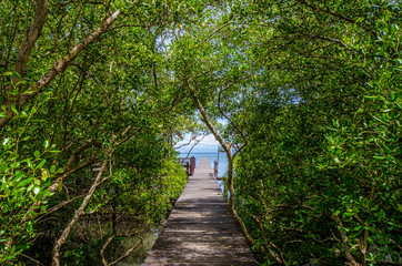 Wooden walkway in the mangrove forest to the sea.