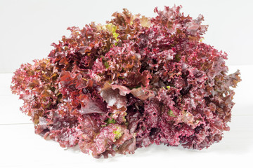 Fresh bunch of Lollo Rosso or coral lettuce