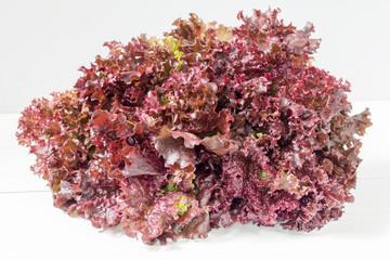 Fresh bunch of Lollo Rosso or coral lettuce