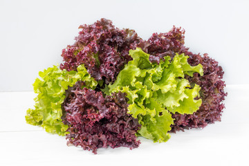 Fresh leaves of Lollo Rosso and Green lettuce