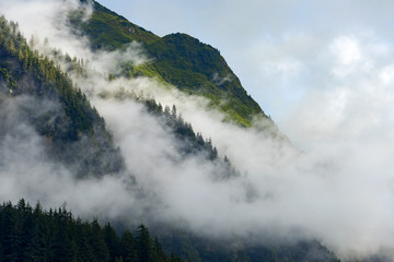 Fog rolling over mountain top forest
