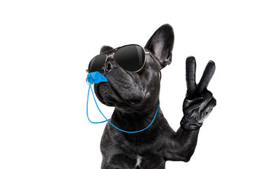 referee dog with whistle Wall mural