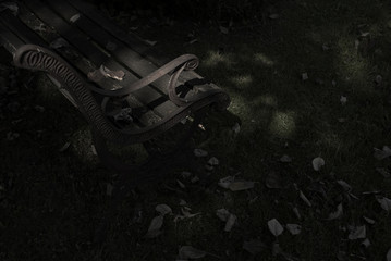 Moody shot of park  bench corner inside a forest setting.