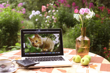 photographer working place in summer garden with laptop with kitten image flowers in vase teacup on the table