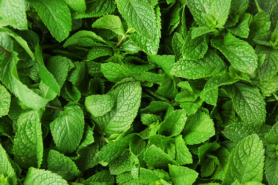 Fresh mint leaves as background