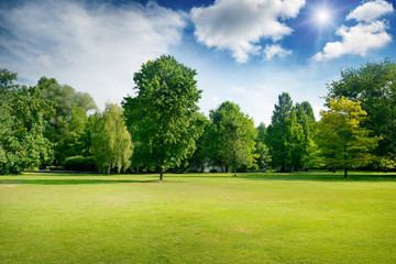 Bright summer sunny day in park with green fresh grass and trees. Wall mural