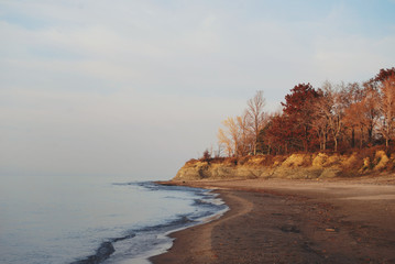 Trees turning color in autumn on the beach