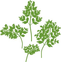 Silhouettes of green parsley leaves on white background
