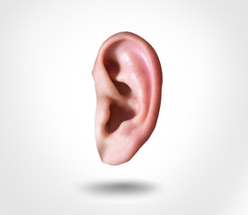 human ear isolated on white background