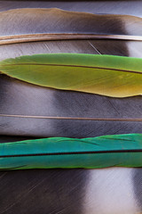 Macro detail of feathers of contrasting colours
