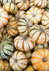 Bin full of mini striped pumpkins