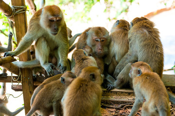 amicable family of monkeys are kept together in the wild
