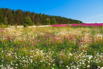 spring  landscape with  flowers on a meadow and  sunset