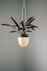 Hanging Plant in Corner of Grey Room