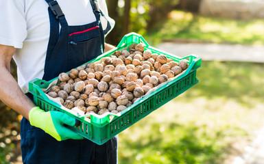 Man holding box full of walnuts