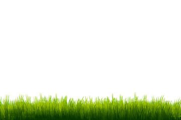 Grass on white copy-space background template