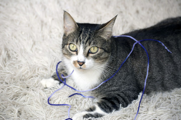 Gato fofo tapete brinca lã roxa
