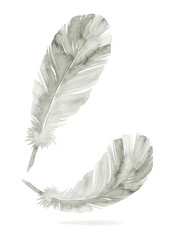 Feathers painted with watercolors on white background.