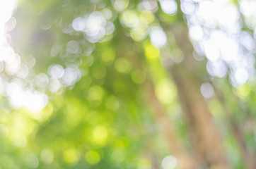 Defocused bokeh background of garden with blossoming trees in sunny day