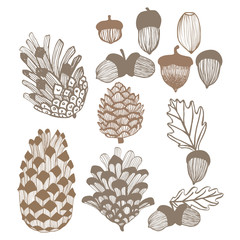 Cones and Acorns Set. Hand Drawn Autumn and Winter Design Elements. Vector Illustration
