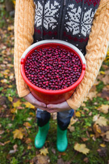 Woman with a bucket of cranberries