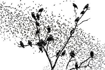 starlings sitting on the branches of raster graphics
