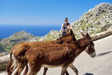 Mallorca: Straße nach Sa Calobra