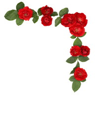 red rose white background  wreath garland flower nature beauty with clipping path