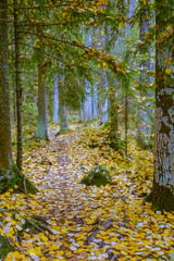 Autumn in Finland, forest, nature photography. Travel. Tonning