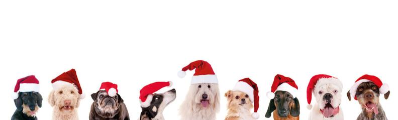 Verschiedene Hunde mit Nikolausmützen in der Reihe