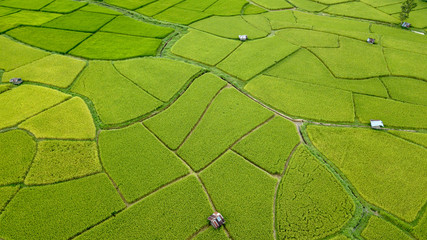 Photo sur Toile Vue aerienne Aerial view of the green and yellow rice field, grew in different pattern, soon to be harvested, Nan, Thialand